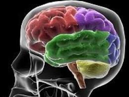 Доказаха, че мозъкът предвижда грешките A_f9e41