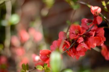 Lazito | Дъх на пролет | 43 харесвания