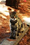 Никол Маджарова12 | Котенце | 215 харесвания