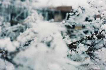 Иван Недялков | Близо до зимата | 12 харесвания