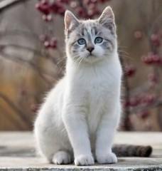 Vehtiya | Котка / Cat | 3 харесвания