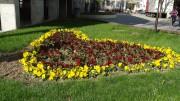 Madam Tulip | Градинка в Пазарджик | 6 харесвания