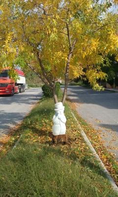 Annni | Златна есен. | 18 харесвания