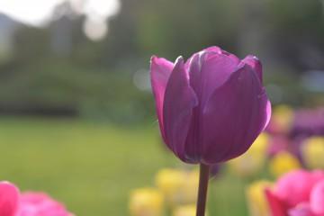 SYStemata | Пролет | 26 харесвания