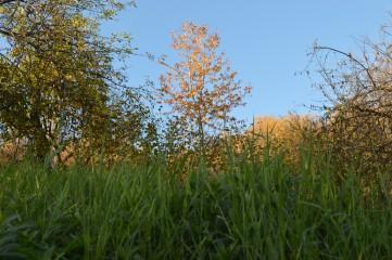Plami99 | Златна есен в Априлци | 2 харесвания