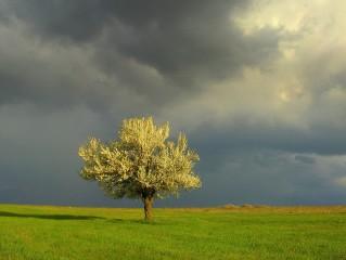 Eliana_m72@mail.bg | Цветовете на пролетта | 6 харесвания