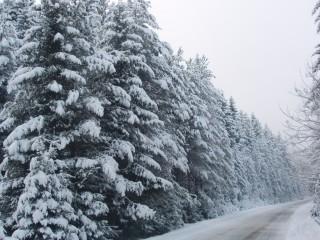 Jpeovska@abv.bg | зимата дойде | 36 харесвания