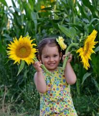 Krasimisa | Слънчогледи | 7 харесвания