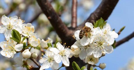 S.marchev@abv.bg | Пролетно жужене | 56 харесвания