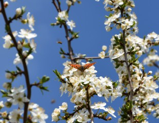 S.marchev@abv.bg | Пролет | 47 харесвания