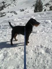 Rosi | Зимно куче | 28 харесвания