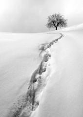 Minions | Бяла тишина | 67 харесвания