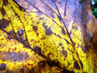 Rumiii55 | Златна есен 1 | 2 харесвания