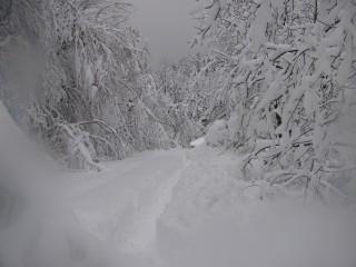 Acho1976@abv.bg | снежен Кръстец | 94 харесвания