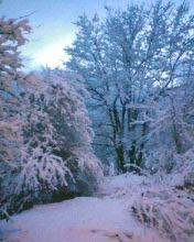 Юлия | Зима в Смолян | 20 харесвания