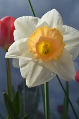 Sideris | цветя | 8 харесвания