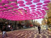 Sabidi | Витошка в розово