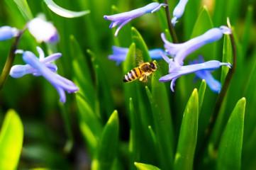 Faresbg@yahoo.com   Пчела   51 харесвания