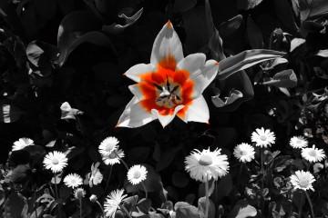 Puhim | бяло и оранжево | 31 харесвания