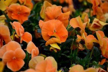 Puhim | оранжево е морето | 23 харесвания