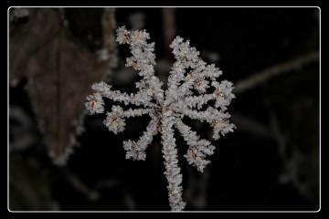 Azur | като снежинка | 59 харесвания