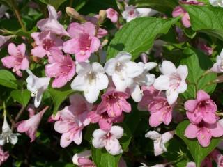Tonitoni7 | Пролетна нежност | 1 харесвания