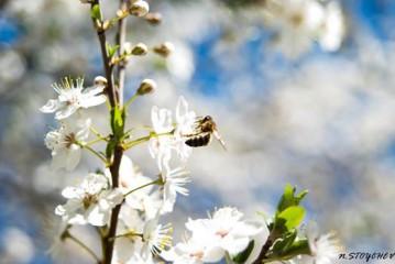 Iva75bg@yahoo.com | Пролет | 52 харесвания