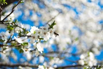 Iva75bg@yahoo.com | Пчела | 42 харесвания