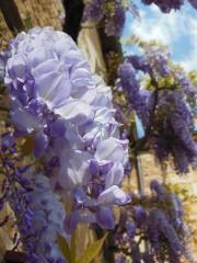 Teo13a@yahoo.com | пролет в замъка Castelnaud | 28 харесвания