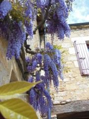 Teo13a@yahoo.com | village de Castelnaud | 12 харесвания