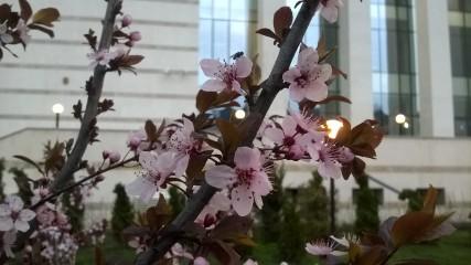 Bonic | Lovely Spring | 0 харесвания