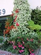 Yankapetrova@yahoo.com | пролет в Лос Анжелис | 47 харесвания