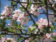 ВЖ | пролет | 4 харесвания