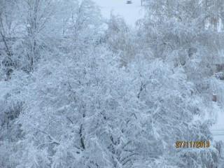 Taratajka | Сняг | 25 харесвания