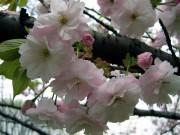 Стоимен Стоименов | пролет цъфна... | 158 харесвания