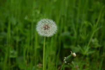 Julieta_81@abv.bg | пролет | 24 харесвания