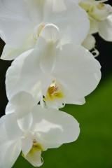 Julieta_81@abv.bg | Орхидея | 24 харесвания