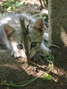 Nikinka | Иш, миш, ти жумиш! | 247 харесвания