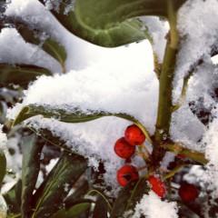 ива87 | Зима | 58 харесвания