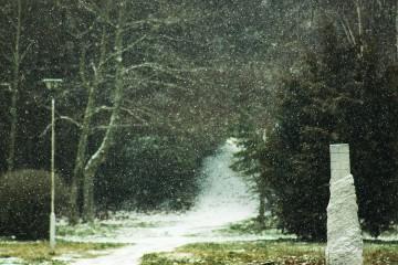 Stef lvanova | Сняг вали,вали... | 12 харесвания