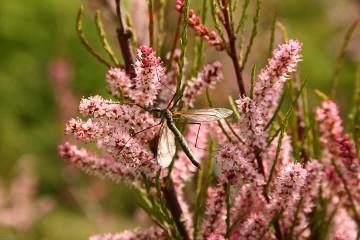 Stef lvanova | Пролет в розово | 25 харесвания