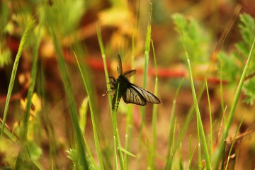 Stef lvanova | Пролетни багри | 11 харесвания