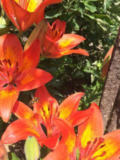 Zap Ryan | Цветен рай | 6 харесвания