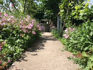 Zap Ryan | Пролет пукна | 1 харесвания