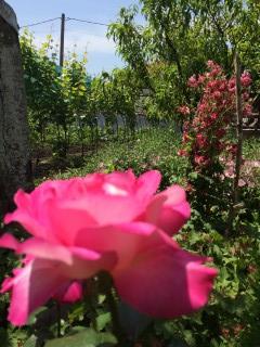 Zap Ryan | Една роза | 1 харесвания