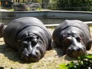 Зоологическа градина Виена