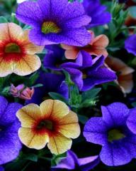Vali_80@abv.bg   красиви цветя   125 харесвания